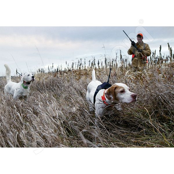 Garmin Astro 220 Hunting and Dog Tracking GPS Additional Photo #3