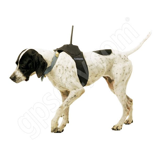 Garmin DC 20 Dog Harness Additional Photo #5