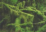 CLOSE UP! beautiful green moss.